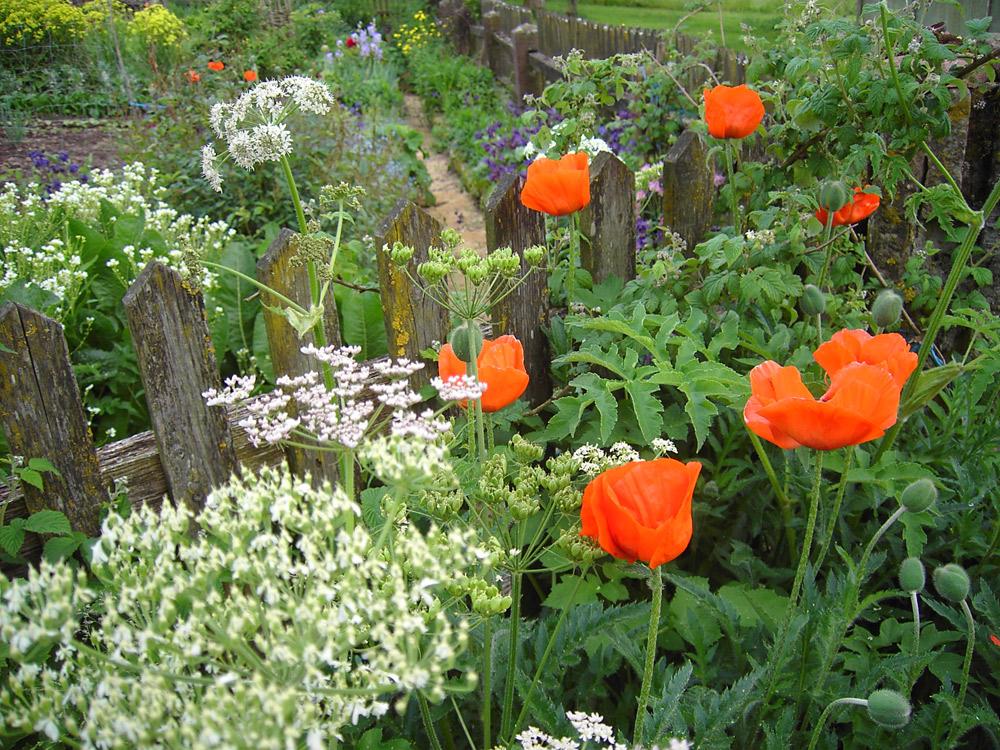 Blick in den Gemüsegarten im Frühling