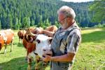 Frieder Wolber (Schöngrund) mit einer Kuh