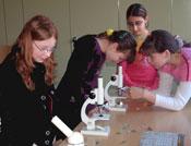 Schüler beim Mikroskopieren