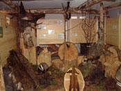 Bereich Waldwirtschaft