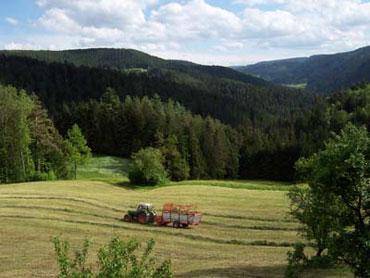 Landschaft im Rohrbach